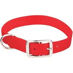 Picture of Westminster Pet Ruffin' it Nylon Dog Collar